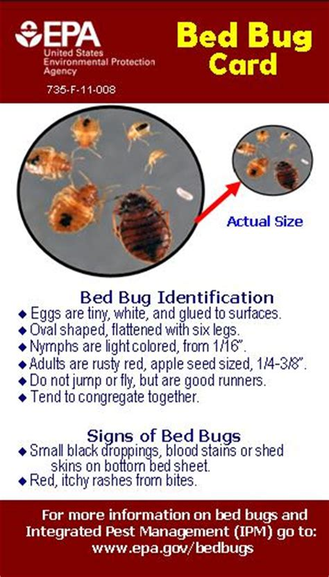 epa bed bugs an elderly tenant s path to overcoming bed bugs the epa blog