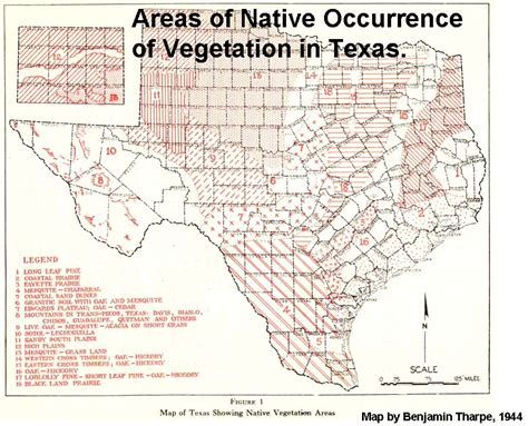 piney woods texas map why boogie woogie did not i