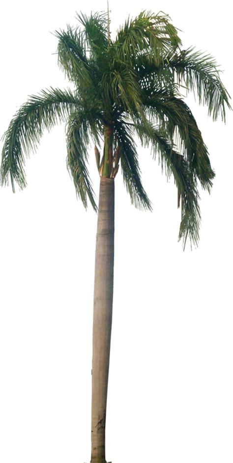 tutup kaca palm coconut trees texture
