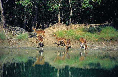 sundarbantours travel to nature with care image gallery sundarban bangladesh