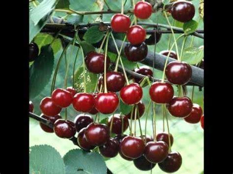 cherry tree investments v landmain 2012 george washington the cherry tree