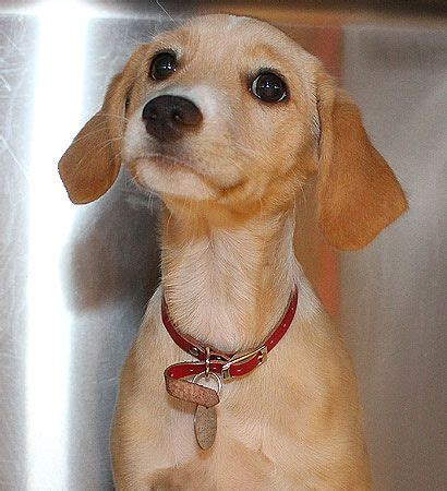 shore animal league puppy pin by carryhome on adoptable pets