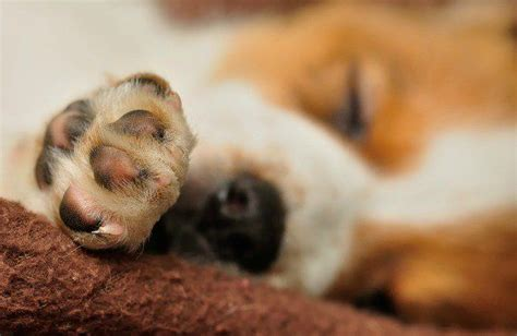 paw bleeding 15 best images about woof world helpful links on around the worlds