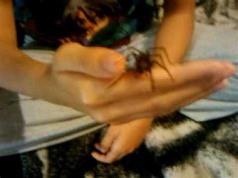 do house spiders bite do house spiders bite yahoo answers