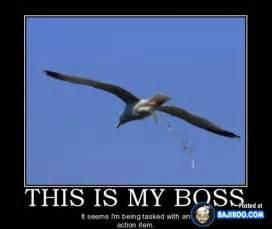 Happy Boss S Day Meme - funny boss meme memes