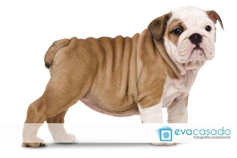 imagenes animales perros fot 243 grafo de animales en madrid eva casado