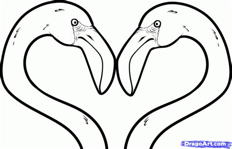 dolphin head coloring page animated dolphin pictures coloring home