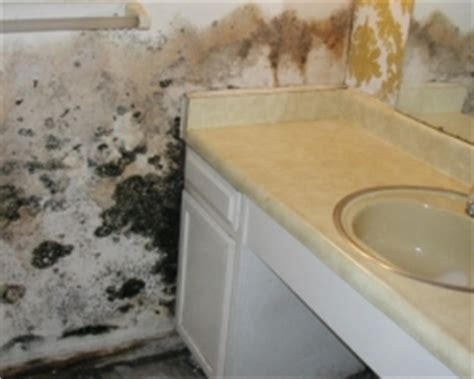 black mold on walls in bathroom qci mold removal testing clearwater ta st pete mold