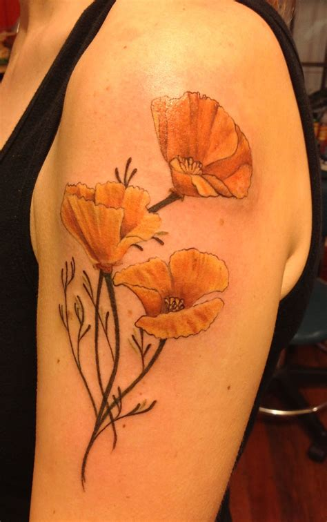 poppy tattoo designs scientific illustration inspired california poppies my