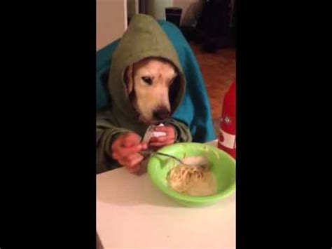 can dogs eat spaghetti spaghetti www pixshark images galleries with a bite