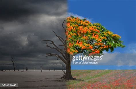 alive tree half deadhalf alive tree in a desertmeadow lands stock