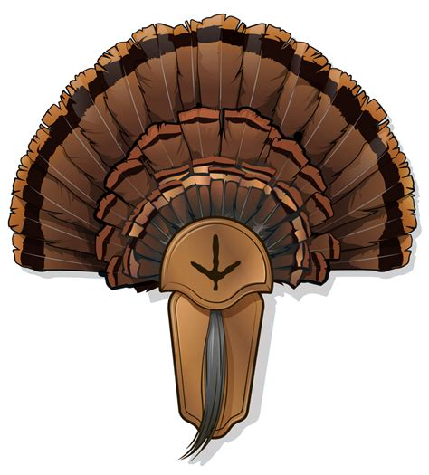 how to mount a turkey fan 5 diy turkey taxidermy projects