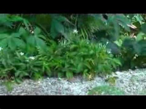 Obat Mata Katarak Tradisional obat mata bunga katarak joko sartono