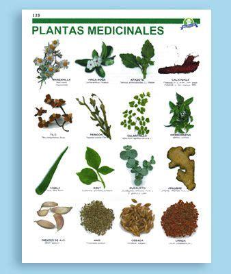 plantas medicinales plantas medicinales dibujos antiguos buscar con google m 225 s search