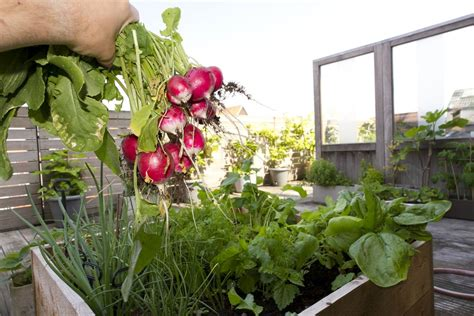 vegetables   grow  containers
