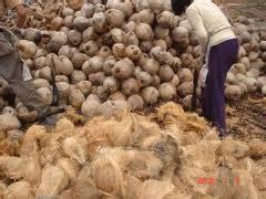 Minyak Kelapa Di Pasar sejarah minyak kelapa whayudha s weblog