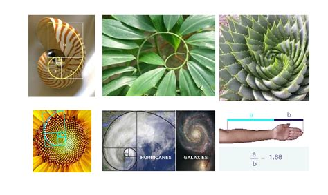 golden section in nature golden ratio in ui design cubet techno labs blog web