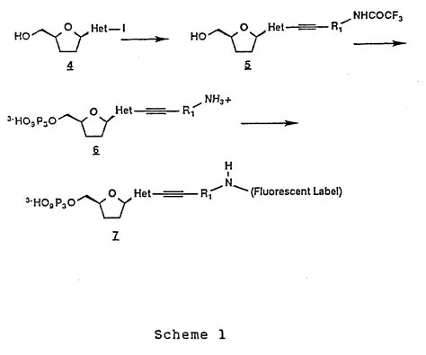 j carbohydrates nucleosides nucleotides patent ep0251786a2 alkynylamino nucleotides patents
