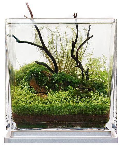 nano aquascape nano aquascape with emergent driftwood aquascapes pinterest the roof the o jays