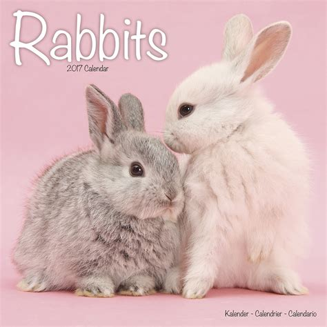 rabbits calendar 2017 pet prints inc