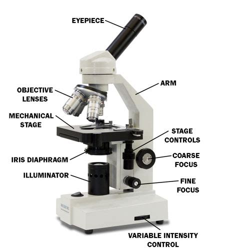 Labeled Diagram Of A Microscope With Functions