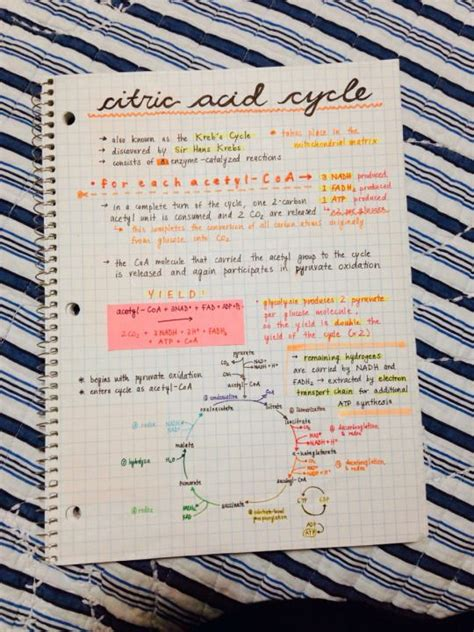 tumblr themes for notes from studyorcry tumblr studyblr study notes