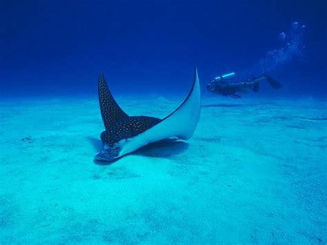 imagenes reales del fondo del mar vida marina animales en el fondo del mar