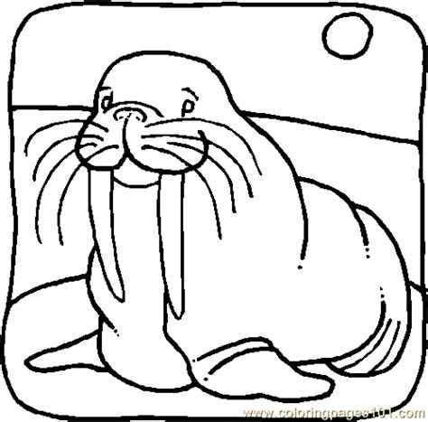 coloring page for walrus coloring pages walrus001 animals gt walrus free