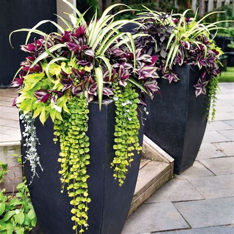 Plants For Planters by 25 Best Ideas About Outdoor Flower Pots On