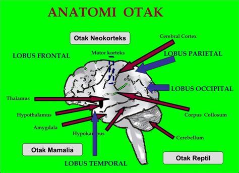 Fisiologi Manusia Edisi 8 anatomi otak