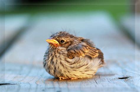 abandoned baby bird google image