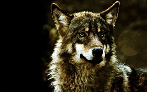wallpaper cool wolf cool wolf backgrounds 183