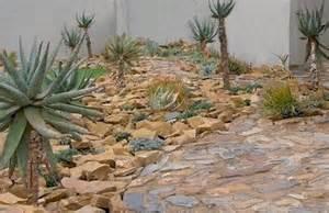 my aloe garden rock gardens