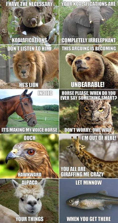 Funny Pun Memes - 1000 images about animals on pinterest funny animal
