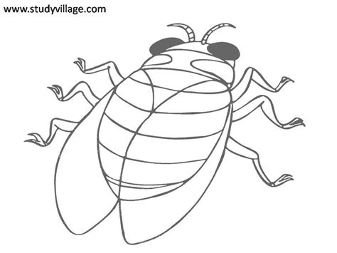 printable pictures insects funny insects printable coloring page for kids 9