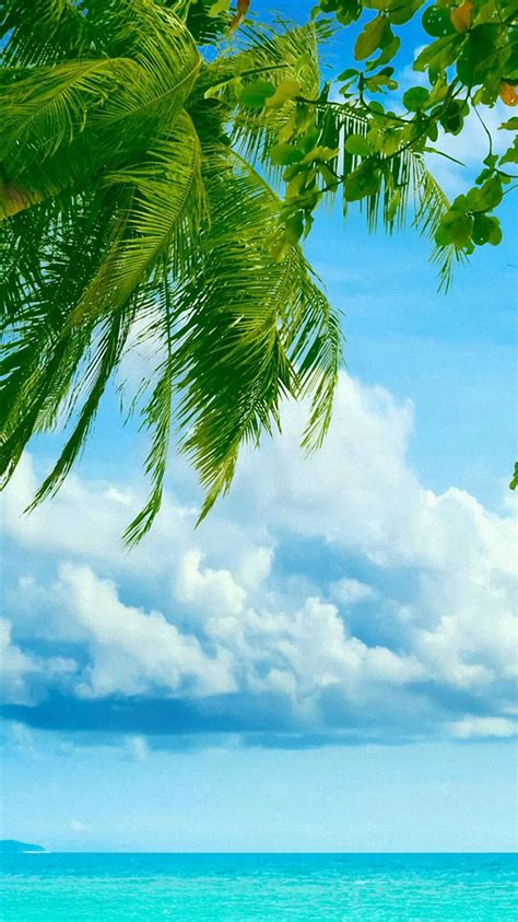 wallpaper hd iphone 6 beach sea tree beach clouds tropical iphone 6 wallpapers hd and