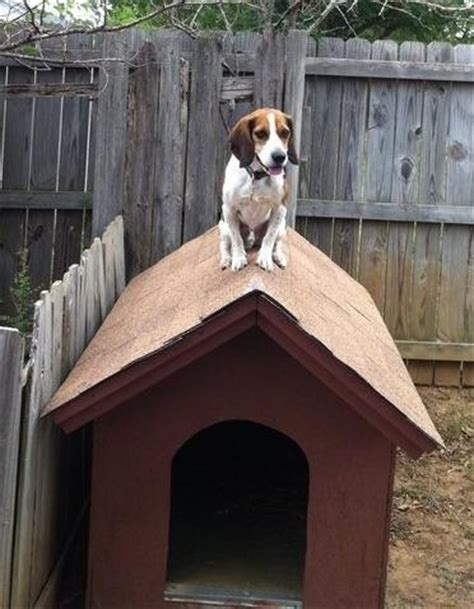 real dog house snoopy precious puppies pinterest