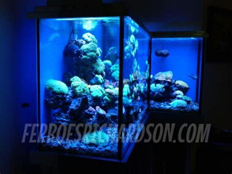 Lu Led Aquarium Air Laut inspirasi aquarium ini luaarrr biaasaaa ferboes