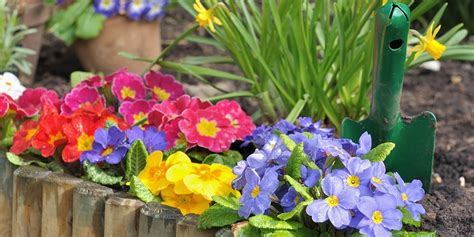 spring garden ideas spring gardening tips and ideas bunnings warehouse