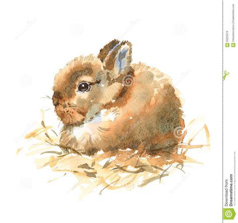 baby bunny watercolor animals illustration