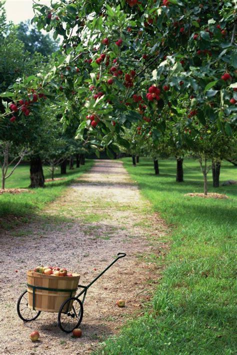 backyard apple orchard best 20 orchards ideas on pinterest fruit tree garden