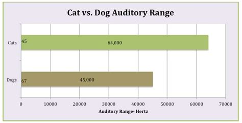 sounds only dogs can hear new study says these common sounds could cause your cat to seize iheartcats