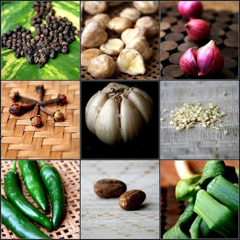 Bibit Tanaman Toga penjual tanaman dan bibit tanaman obat indonesia