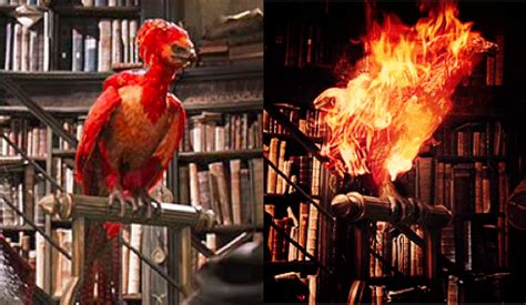the real fawkes books fawkes harry pesquisa fawkes
