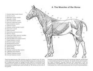 veterinary anatomy coloring book 1000 images about no 5 anatomy on