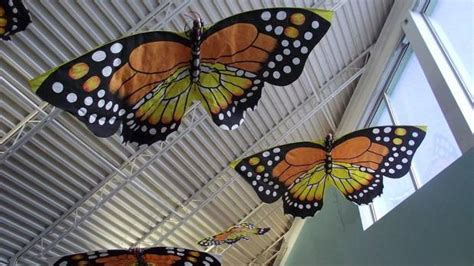 collector shows off some of his 3 800 kites the globe