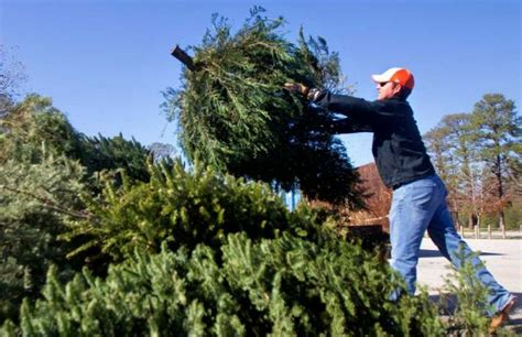 several options for christmas tree recycling in the ozarks