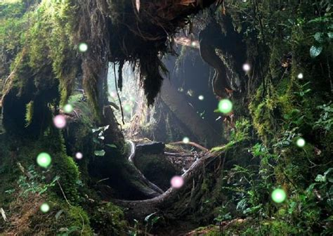 enchanted magical forests 0994355432 magical forest fairies www imgkid com the image kid has it