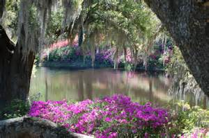 the beauty of the old southern gardens so southern