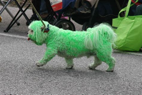 dogs with green if you a lot of grass don t get a white pics